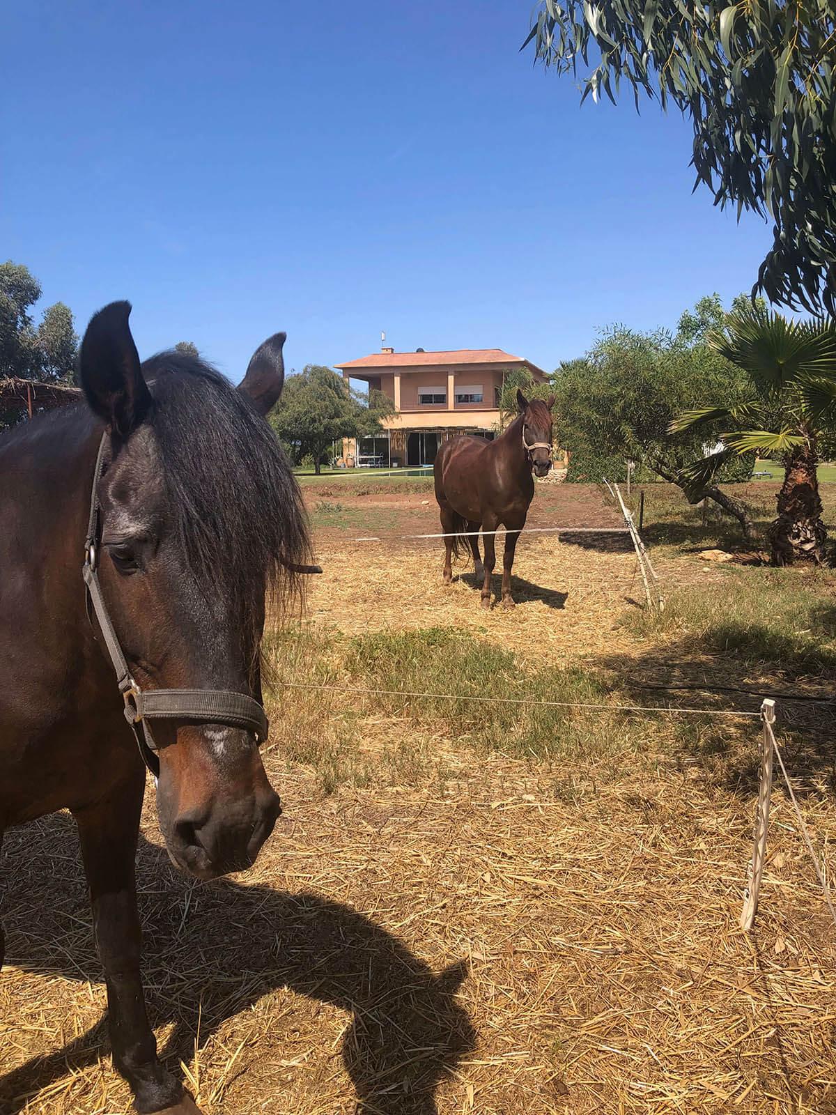 Had-Soualem-Morocco-33-Horses.jpg